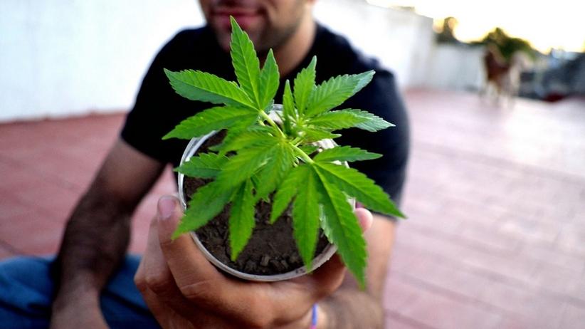 Naukowcy zbadali wpływ legalizacji marihuany na popularność sieci fast food