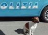Włoska mafia wydała wyrok śmierci na... psa