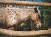 Skandal w zoo. Imigrant z Syrii zgwałcił kucyka
