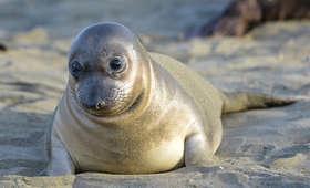 Pendrive pełen wakacyjnych zdjęć znaleziony w... odchodach foki. Poszukiwany właściciel
