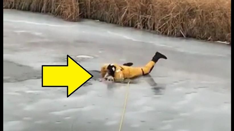 """Pies wpadł pod lód. Strażak spróbował go wydostać. """"Ryzykował życiem"""" [WIDEO]"""