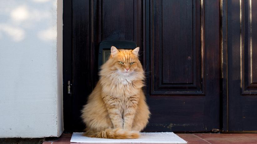 """Nazwała kota Brexit, bo """"miauczy, że chce wyjść, a potem siedzi w otwartych drzwiach i nie wychodzi"""""""