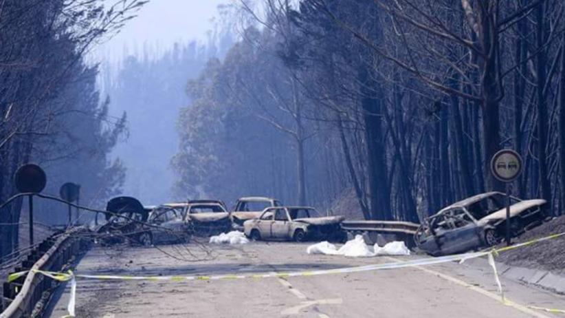 Ponad 20 mln euro strat po pożarach w Portugalii