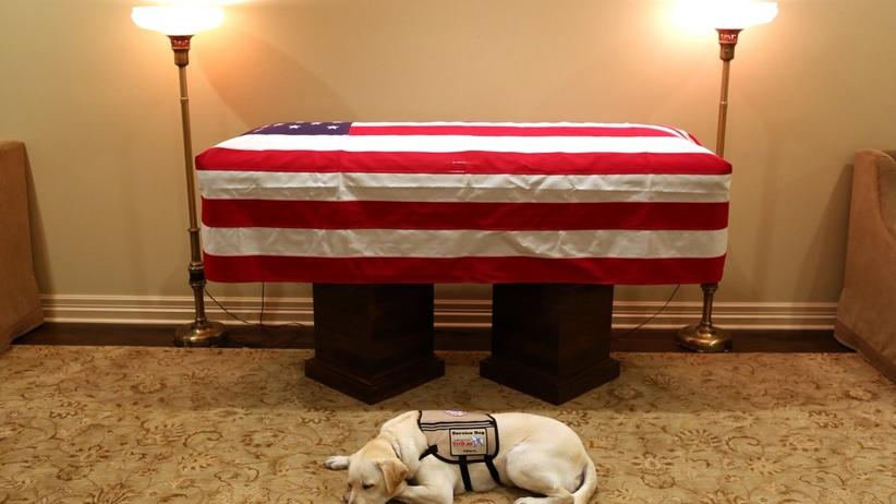 Poruszające zdjęcie. Pies George'a Busha czuwa przy trumnie swego pana