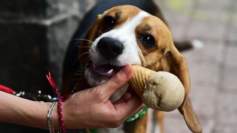 Lodziarnia dla psów w Meksyku
