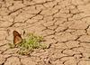 Raport WWF: przez ostatnie 40 lat populacja zwierząt zmalała o 60 procent