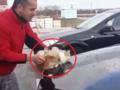 Szokujące nagranie. Zamoczył kota i umył nim samochód [WIDEO]