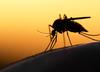 Kolejne ofiary śmiertelne wirusa Zachodniego Nilu
