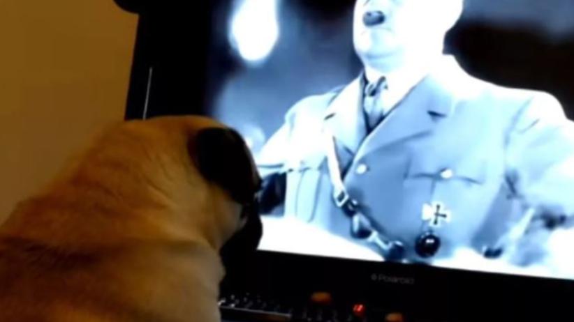 Nauczył mopsa hitlerowskiego pozdrowienia. Jest decyzja sądu [WIDEO]