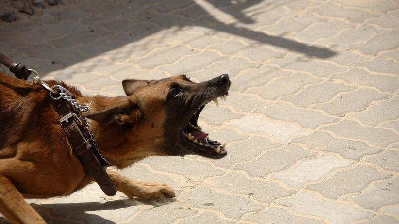 Pies zęby