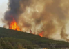 Fala pożarów w Tunezji. Spłonęło ponad 2000 hektarów lasów [FOTO]