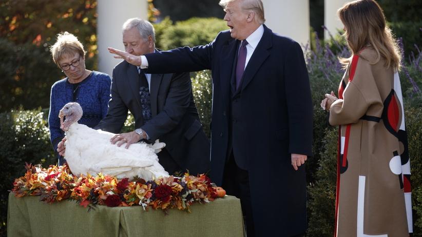 Donald Trump ułaskawił indyki przed Świętem Dziękczynienia