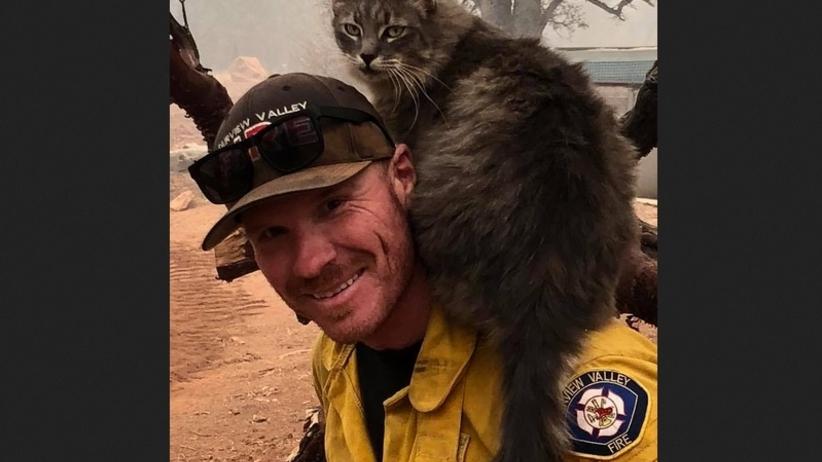 USA: strażak uratował kota z pożarów w Kalifornii, zyskał przyjaciela