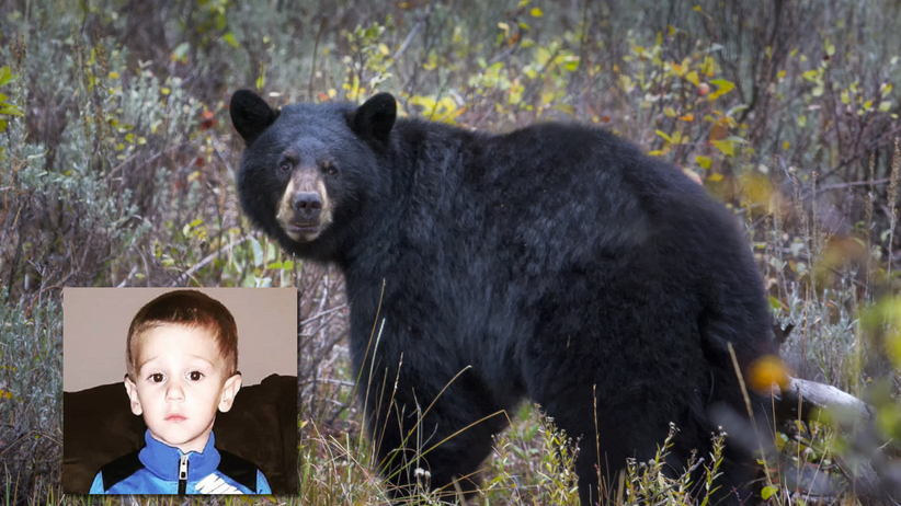 Zaginiony trzylatek odnaleziony w lesie. Twierdzi, że opiekował się nim niedźwiedź