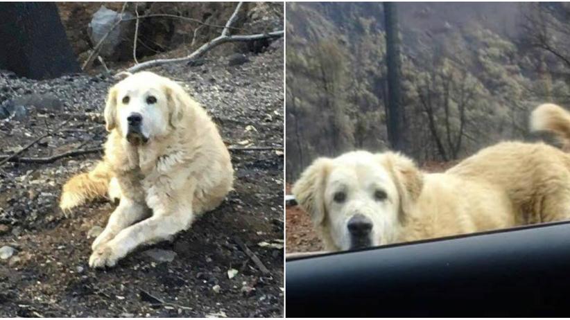 USA. Pies tygodniami pilnował spalonego domu w Kalifornii