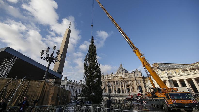 Idą święta! Choinka już na placu św. Piotra w Watykanie