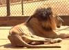 W Wenezueli głodują nawet zwierzęta w zoo. Zabijają jedne, by nakarmić drugie