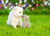 Wielka Brytania. Rząd wprowadzi zakaz sprzedaży szczeniaków i kociąt w sklepach zoologicznych