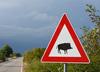 Włochy: na autostradę weszło stado dzików. Nie żyje Polak