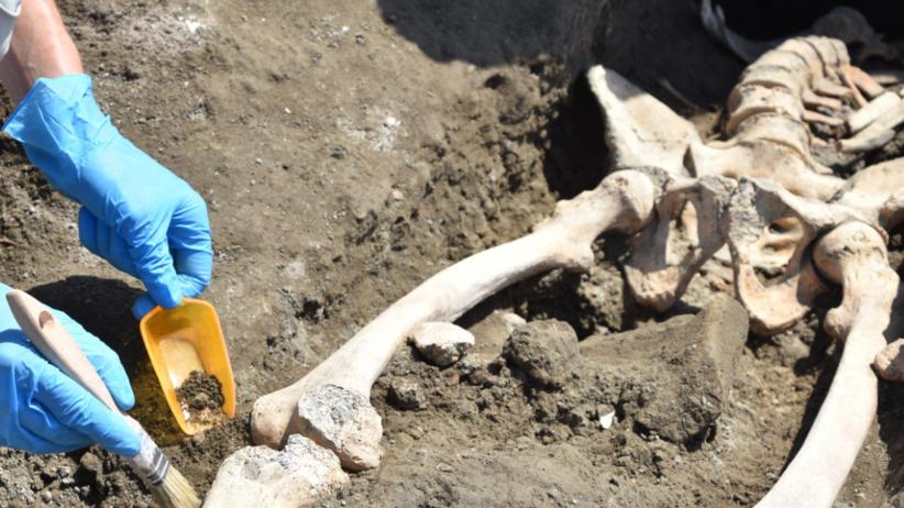 Sensacyjne znalezisko pod szkieletem z Pompejów. Pochodzi z... 79 roku!