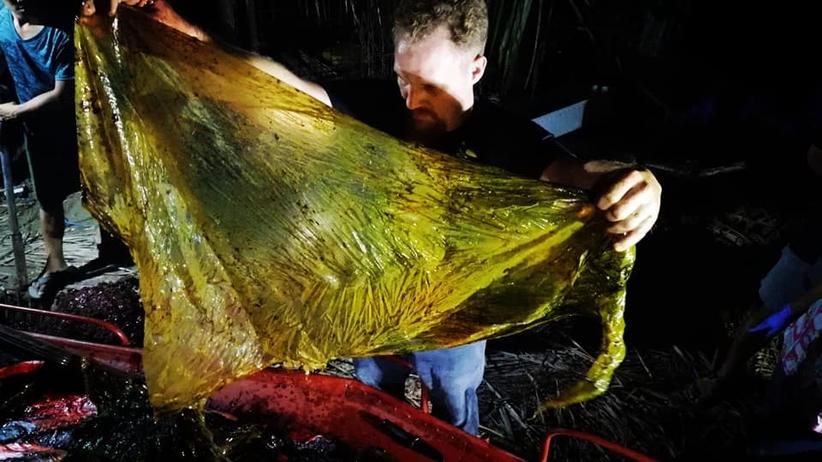 40 kg plastiku w żołądku wieloryba. To niechlubny REKORD [ZDJĘCIA]