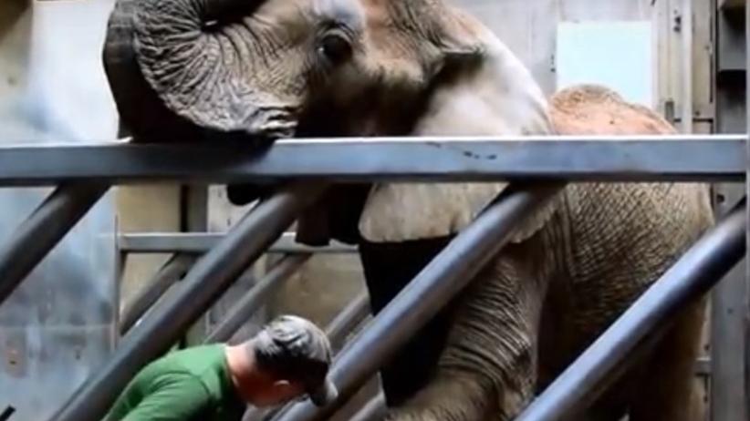 Słoń Ninio