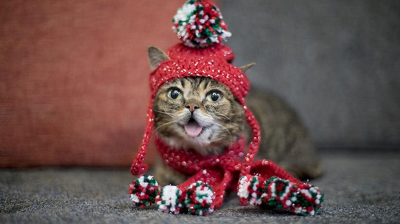 Nie żyje internetowa kotka-celebrytka, obserwowana przez miliony internautów