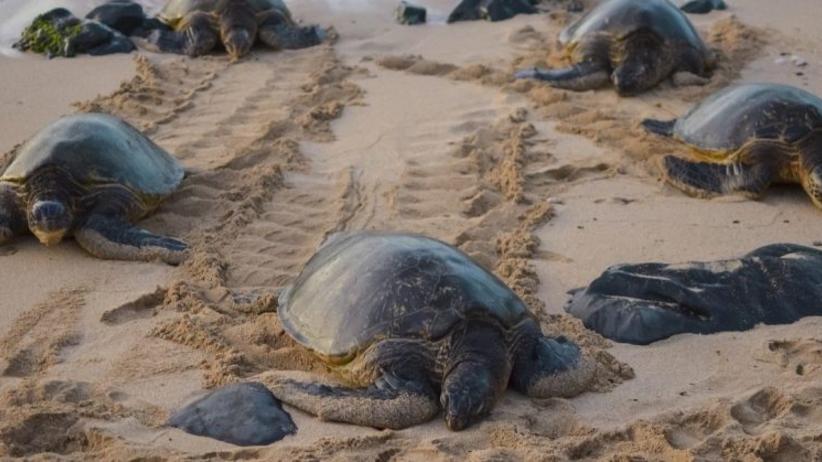 żółwie skórzaste