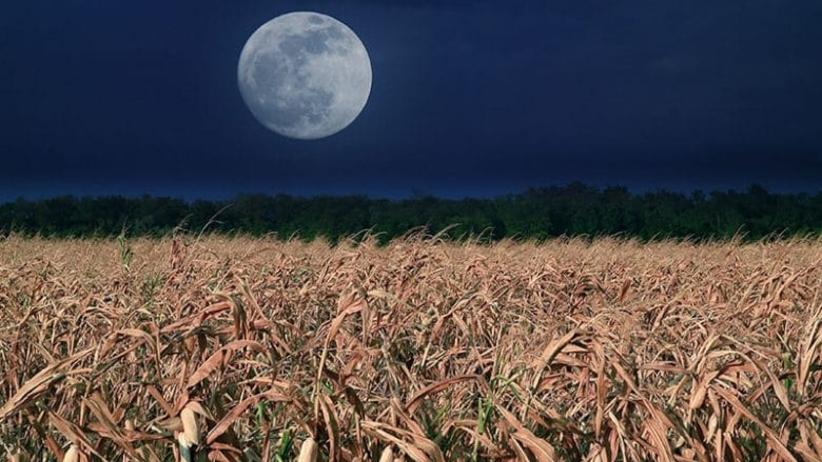 kukurydziany księżyc 2020