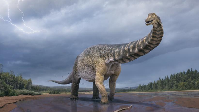 Nowy gatunek dinozaura