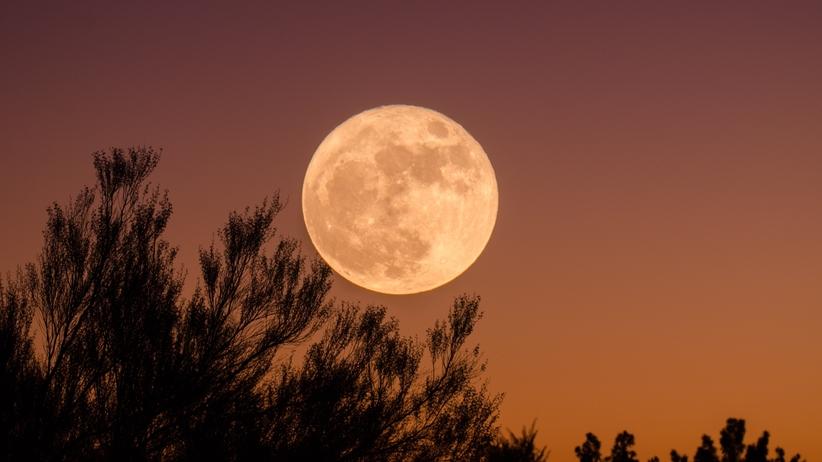 Bobrzy Księżyc 2020