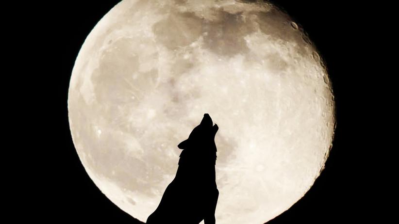 Wilczy Księżyc 2021