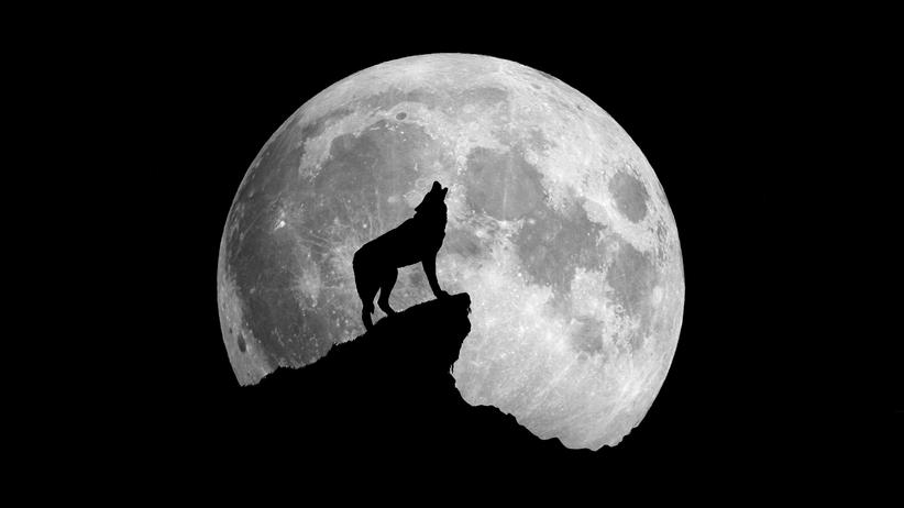 Wilczy księżyc