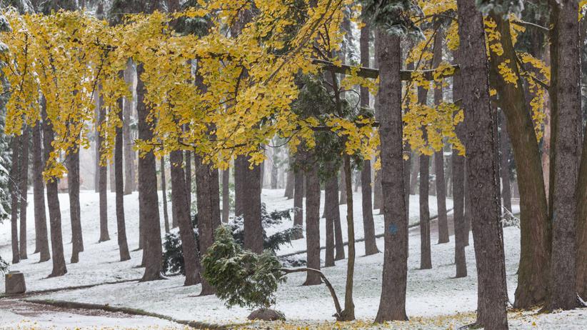 Pogoda. Arktyczne powietrze w Polsce. Spadnie śnieg z deszczem