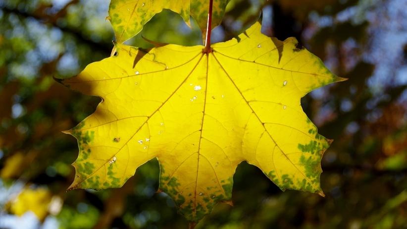 Pogoda, jesień
