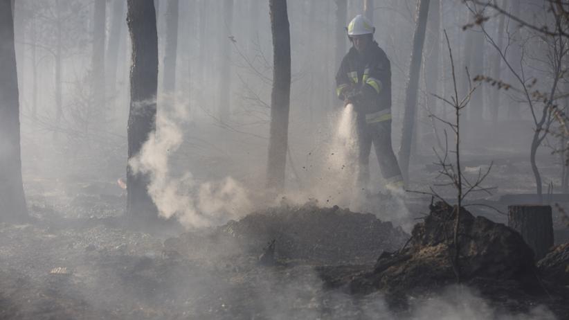 Pożar w lesie. Strażacy znaleźli spalone zwłoki i samochód