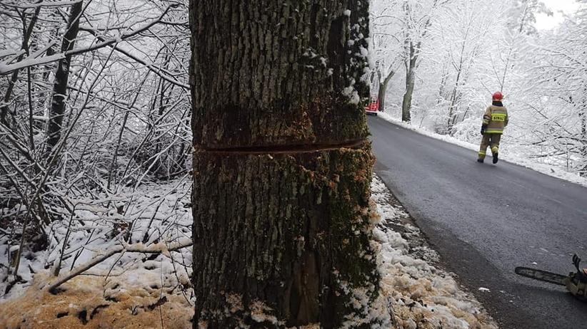 Zdewastowane drzewa