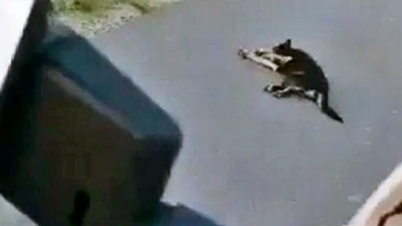 Kierowca brutalnie przejechał psa. Tak się tłumaczył: ''Wiesz jaki jestem''