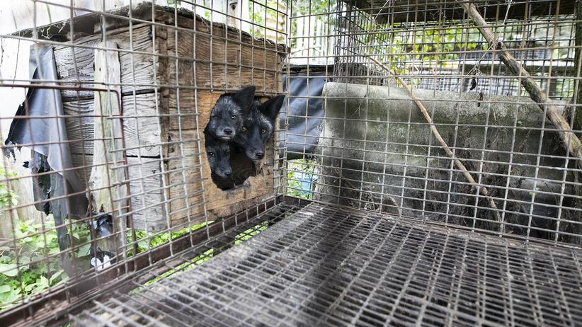 Makabra na pseudohodowli. Aktywiści ratują kolejne zwierzęta. NOWE FAKTY