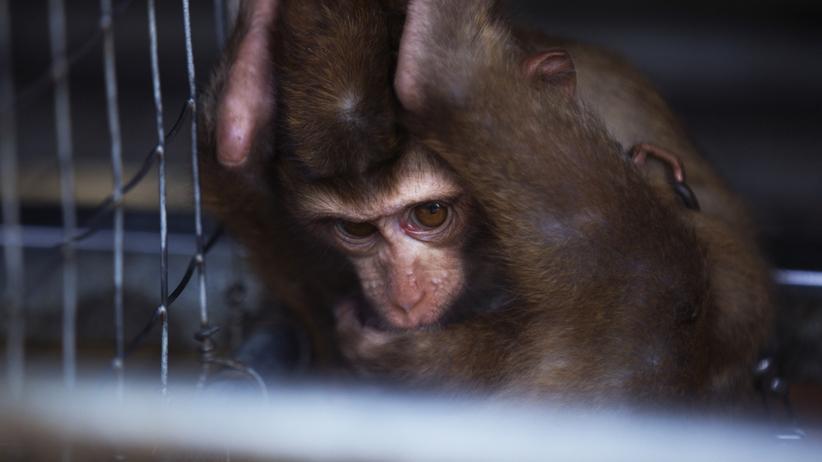 Martwie zwierzęta w sklepie zoologicznym