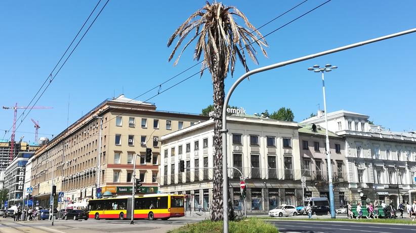 Warszawska palma nagle… uschła. Co stało się z najsłynniejszym drzewem w stolicy?