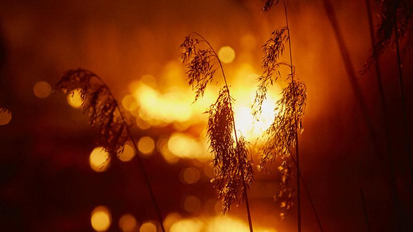 Tak wygląda płonący Biebrzański Park Narodowy. Zdjęcia łamią serce