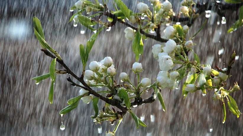 Pogoda. Miejscami opady deszczu i burze