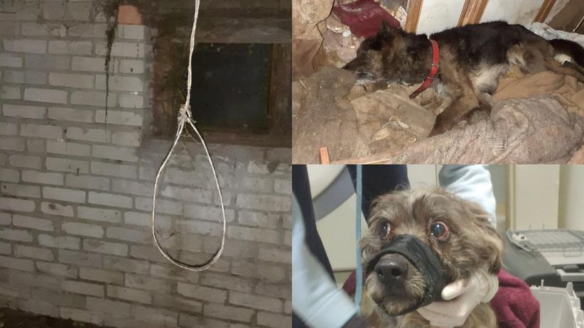 Tarczyn. Tortury zwierząt w piwnicy