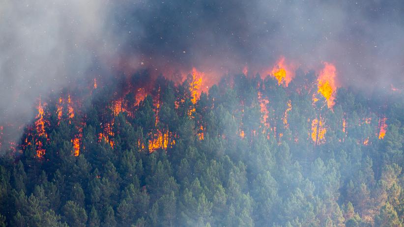 Ogromny pożar lasu na Mazowszu. Płonie 40 hektarów