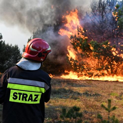 Pożar w Bydgoszczy. Płonie las w okolicach Doliny Śmierci w Fordonie