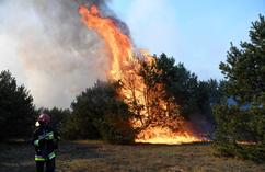 Pożar lasu w dzielnicy Fordon w Bydgoszczy