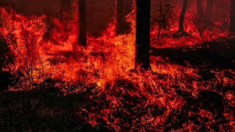Potężny pożar w Puszczy Kozienickiej. Pali się kilka hektarów lasu
