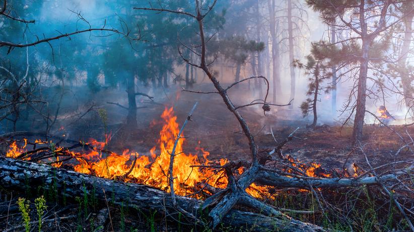 Tylko we wtorek doszło do 363 pożarów lasów. Blisko 5 tys. interwencji straży pożarnej