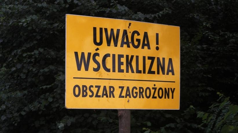 Poznań. Siedlisko wścieklizny w parku Wilsona. Łazarz